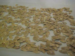 Pumpkin seeds from pumpkin brownies