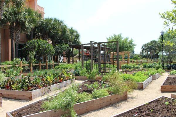 Primo Restaurant Organic Garden JW Marriott Grande Lakes Orlando