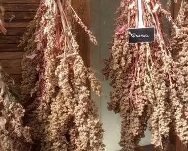 Quinoa - Simply Ancient Grains