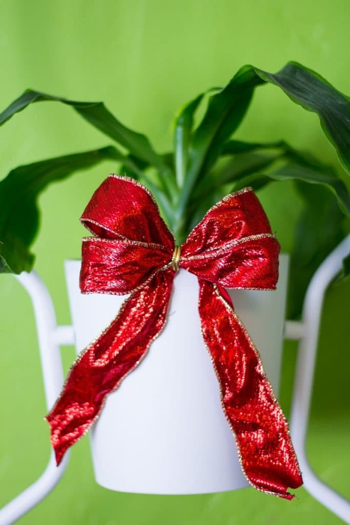 Christmas Party Ideas for Houseplants